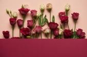 kvetoucí růžové a bílé květy se zelenými listy na růžovém pozadí