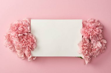 top view of blank white card and beautiful pink flowers isolated on pink background