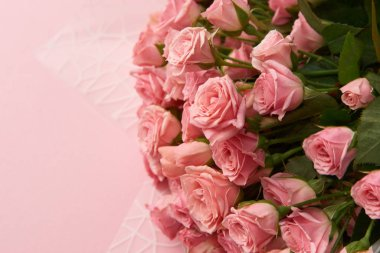 close-up view of beautiful tender pink rose flowers isolated on pink