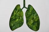 Fotografia vista superiore del modello di polmoni con foglie verdi isolato su bianco
