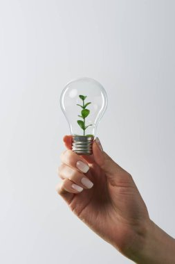 Cropped view of female hand holding light bulb with green plant on white background stock vector