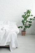 Bed with white sheets and blanket, green plant