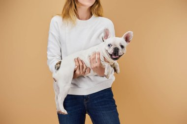 cropped view of woman in white sweater holding french bulldog on beige background