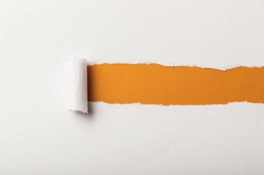torn paper with rolled edge and copy space on orange background