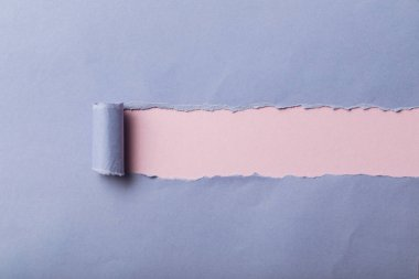 Ripped blue paper with rolled edge on pink background stock vector