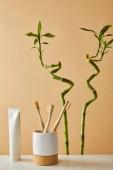 Fotografie zubní pasta v tubě, kartáčky na zuby v nádobce na stůl a zelený bambus na béžové pozadí