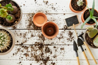 top view of clay flowerpots among plants and tools