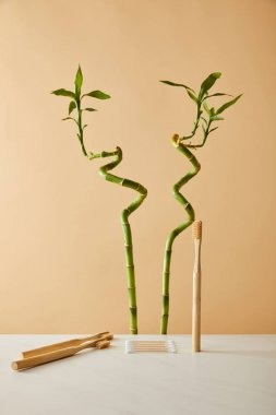 bamboo toothbrush with ear sticks on white table and green bamboo on beige background