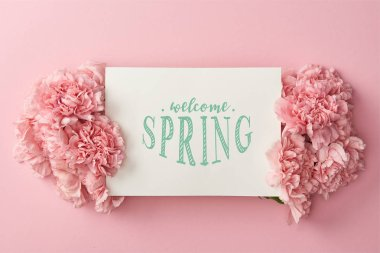top view of greeting card with welcome spring lettering and pink carnations on pink background