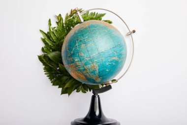 composition of fresh green fern leaves and globe isolated on grey background, earth day concept