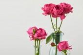 Fotografie frische rosa Rosen in durchsichtigen Flaschen isoliert auf weiss mit Textfreiraum