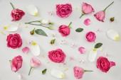 květinové pozadí z růžových růží a lístků Tulipán izolované na bílém