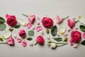pohled shora růžové růže, listy, pupeny a lístky izolované Grey