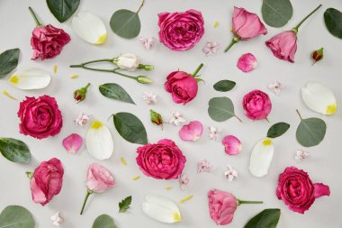 Floral background made of pink roses and tulip petals isolated on white stock vector