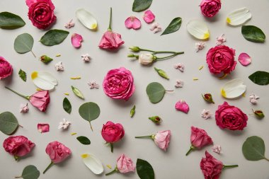 Floral background made of pink roses, buds, leaves and petals isolated on grey stock vector