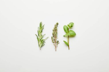 Top view of rosemary, thyme and mint on white background