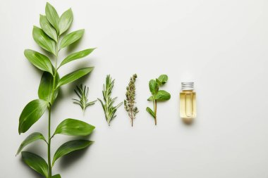 Top view of essential oil and green herbs on white background stock vector