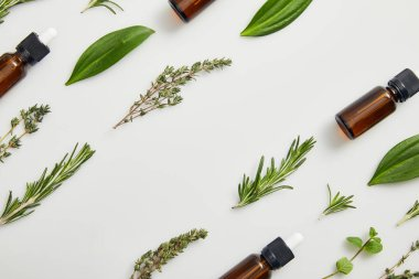 Flat lay with bottles of essential oil, thyme and rosemary on grey background