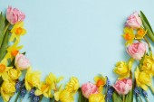 top view of pink tulips, yellow daffodils, blue hyacinths on blue background with copy space