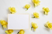 top view of yellow narcissus flowers and white empty card on white background