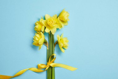 top view of beautiful bouquet of yellow daffodils with yellow ribbon on blue