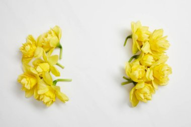 top view of yellow narcissus flowers on white background