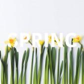 Fotografie krásné Narcis a papíru řezané nápisy Jaro na bílém pozadí