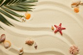 top view of red starfish and seashells near green palm leaf on sand