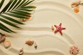 Blick von oben auf grüne Palmblätter in der Nähe von roten Seesternen und Muscheln am Sandstrand