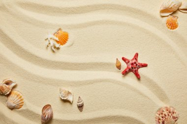 Top view of red starfish and seashells on sandy beach in summertime stock vector