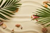 Fotografie pohled na zelené palmové listy blízko červených hvězd a mušlí na písečné pláži