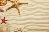 top view of red and yellow starfish, seashells and coral on sandy beach in summertime