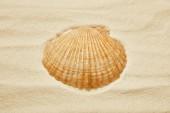 Fotografie orange seashell on beach with golden sand in summertime