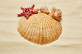 selektivní zaměření mušlí u červených hvězd na pláži se zlatým pískem
