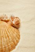 Fotografie selektivní zaměření mušlí na pláži se zlatým pískem