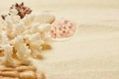 selektivní zaměření bílých korálů blízko mušlí na pláži v létě