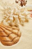 selektivní zaměření moře na pláži v létě v blízkosti bílého korálu