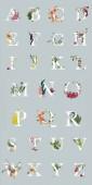 pestrobarevná světlá písmena s rostlinami a květinami izolovanými na šedé, anglické abecedy