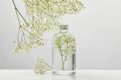 natural beauty product in transparent bottle and white wildflowers on grey background