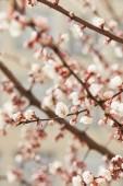 selektivní zaměření kvetoucích květů na větve stromů ve slunečním světle