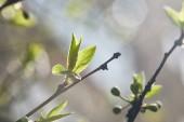 selektiver Fokus von Ästen mit grünen Blättern bei Sonnenschein auf unscharfem Hintergrund