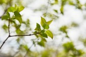 close up of tree branches with green leaves on blurred background
