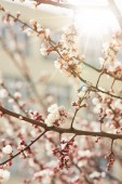 close up of tree branches with blooming flowers and shining sun