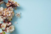 Photo top view of tree branch with blossoming spring flowers on blue background