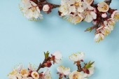 Fotografie tree branches with blossoming white flowers on blue background with copy space