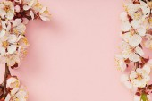 top view of tree branches with blooming spring flowers on pink background