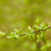 close up of green leaves on tree branch in springtime