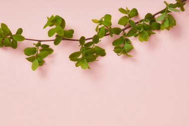 Top view of tree branch with blooming green leaves on pink background stock vector