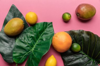 top view of whole ripe tropical citrus fruits and mango with green leaves on pink background