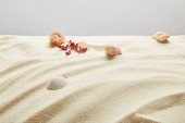 Photo selective focus of seashells and starfish in sand on grey background